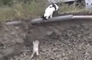 Cat saves Puppy – Our Golden Moment of the week